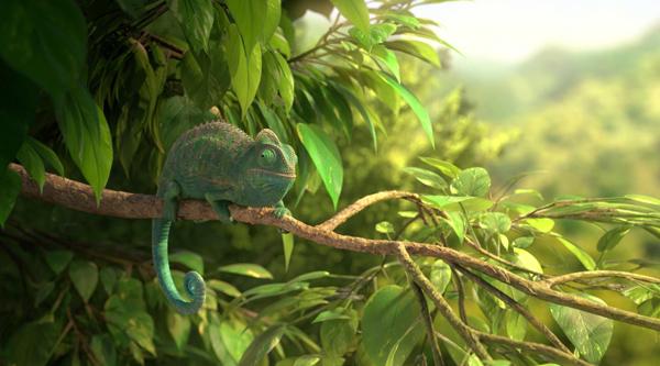 La Nature, cette merveille – le Caméléon commun